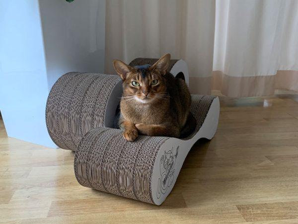 Cat on Corrugated Cardboard